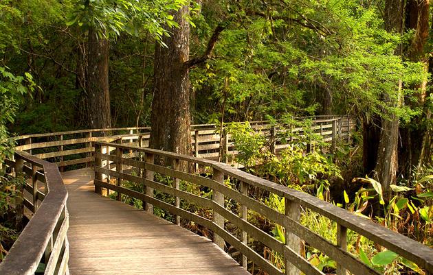 Audobon Corkscrew Swamp Sanctuary